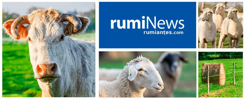 rumiNews