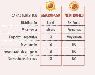 alteraciones sistema inmune