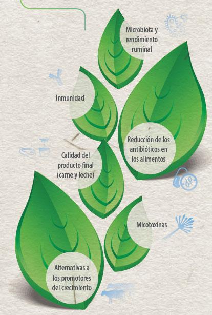 eficiencia alimentaria