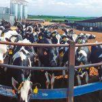 La ganadería lechera – Una pasión que trasciende generaciones