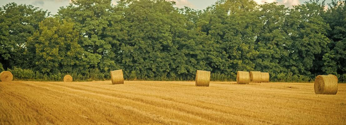gestión ambiental metano ganadería