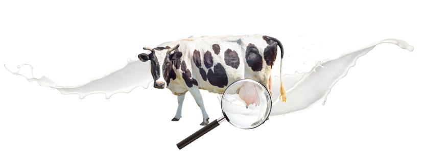 ¿Influye el secado selectivo en el riesgo de infección intramamaria en vacuno lechero?