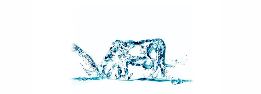 Importancia del agua en las explotaciones bovinas
