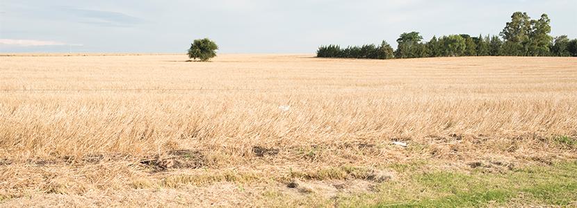 Uruguay ayuda a los ganaderos afectados por la sequía
