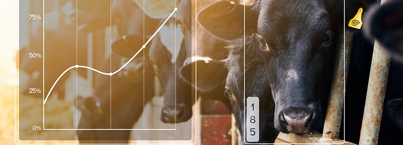 Nueva app para reconocimiento facial del ganado